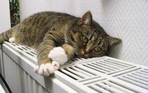 Будет ли внесен налог на животных в России в 2019 году и обязательна ли регистрация кошек и собак: факты и домыслы, а также опыт других стран