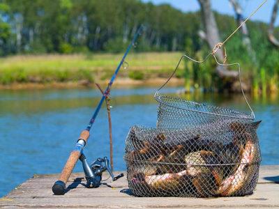 Разведение наживки для рыбалки