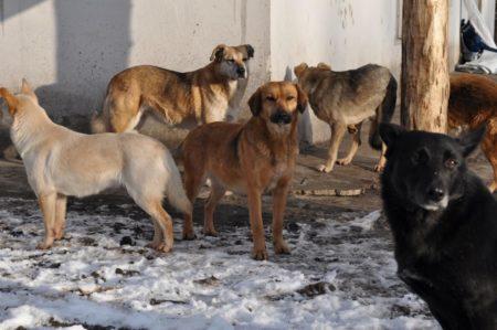 Закон о защите прав животных в России