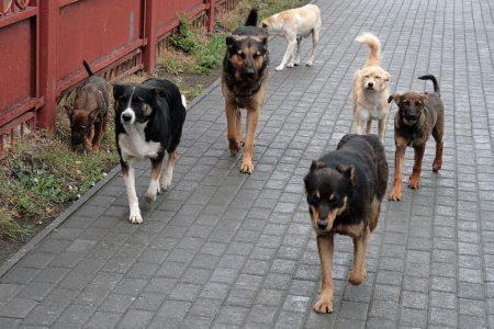 закон о защите домашних и бродячих животных в России