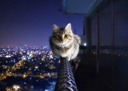 домашние кошки в России
