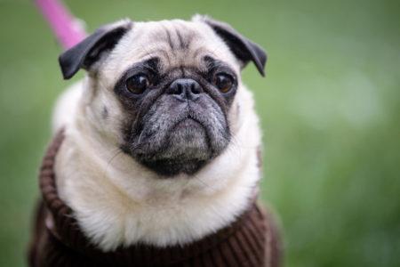 цена домашних животных в россии